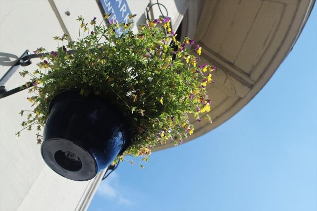 flower pot plantage